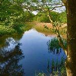 Lynford Arboretum Foto
