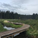 The Beaver Boardwalk Image