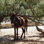 the donkey of Paradise Valley