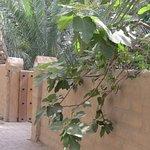 walkway under the palms