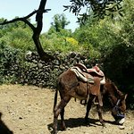 Zdjęcie Etna Donkey Trekking