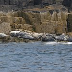 Seals Bathing