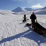 Dog sledding in Adventdalen