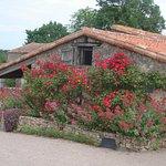 les magnifiques rosiers dans le jardin du temps