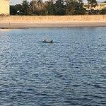 Captain Derek's Dolphin Adventure-bild