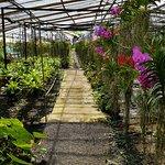 Foto de Phuket Orchid Farm