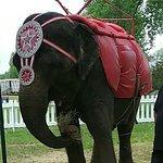 Circus World Foto