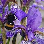Lilac Garden ภาพถ่าย