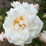 Jardin Antique Méditérranéen ภาพถ่าย
