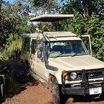 Entering serengeti