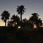 bosquets de palmiers