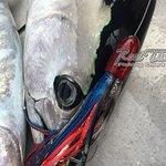 Fishing in Portland for Tuna June 2018