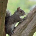 Cute squirrel at visitor center