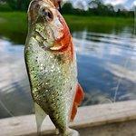 Pianha Fishing!