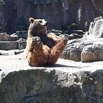 Zoo Aquarium de Madrid Photo