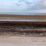 Hotel Beach Seaweed invasion