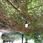 Wonderful Vine Canopy overhead ...