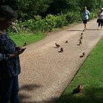 rogue ducklings