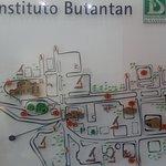 Butanta Institute - SP / Brazil - Lay out of the Institute