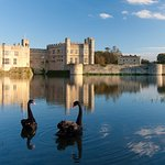 Renowned for its black swans gifted by Winston Churchill.