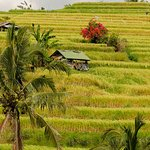 terraced countryside