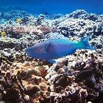 Aqua Adventuresの写真