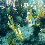 Seemore Adventures Full Day Snokel tour to Glover's Atoll