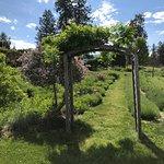 A beautiful stroll through a great garden