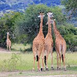 You will spot this in Akagera Park