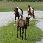 Wild Ponies 2