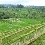 Jatiluwih Green Land ภาพถ่าย