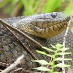 Snake seen during wetwalk