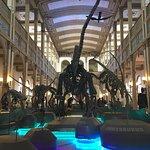 Foto de Museo Nacional de Historia Natural