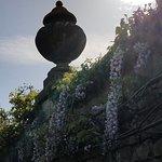 the wisteria
