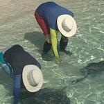 Feeding the rays at Manjack Cay