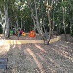 bosco di eucalipti