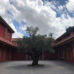 Un olivo tricentenario en un patio interior de la finca