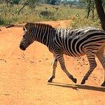 Animals at the Pilanesberg National Park