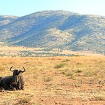 Animals at the Pilanesberg National Park