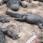 St. Augustine Alligator Farm Zoological Park resmi