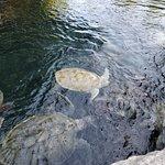 西卡莱特生态公园照片