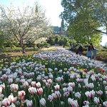 just missed tulip week