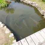 Notogawa Waterwheel & Canoe Land Φωτογραφία