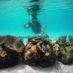 Giant Clam Sanctuary Fotografie