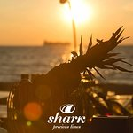 Shark | Precious Times