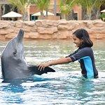 صورة فوتوغرافية لـ Dolphin Bay