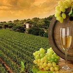 Wine Yards Visiting