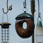 Birdfeeder at Poppies