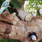 Butterfly House Sardegna照片