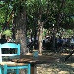 Dionysos Restaurant Photo